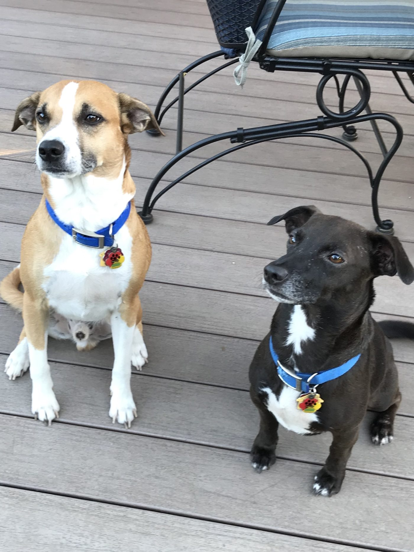 #Waggtaggs #rescuedogs
