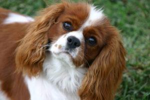 #puppytrainingstockton