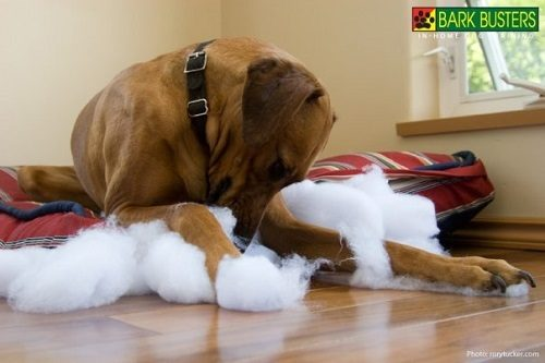 Is Your Dog Destructive?